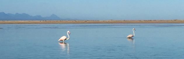 Plettenberg Bay Flamingos